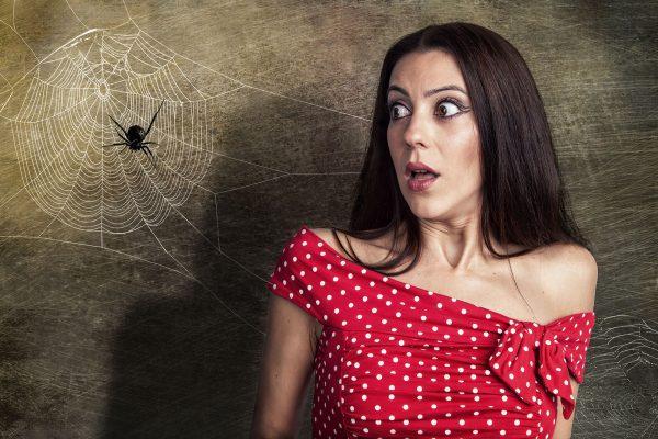 Spinnenangst überwinden